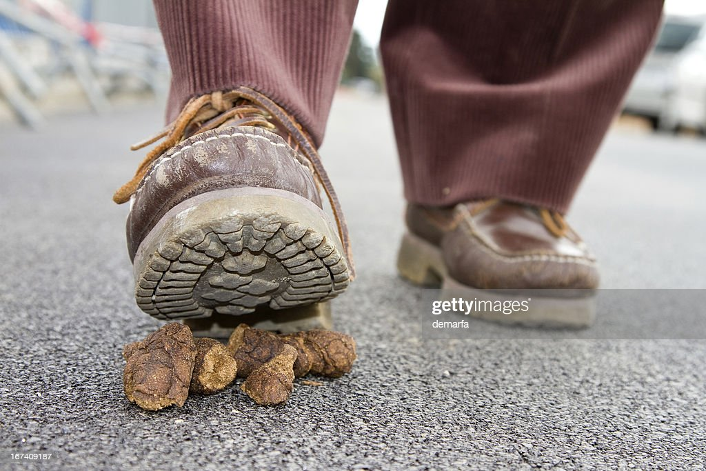 Dog mess : Stock Photo
