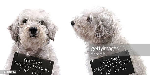 Dog Mug Shots