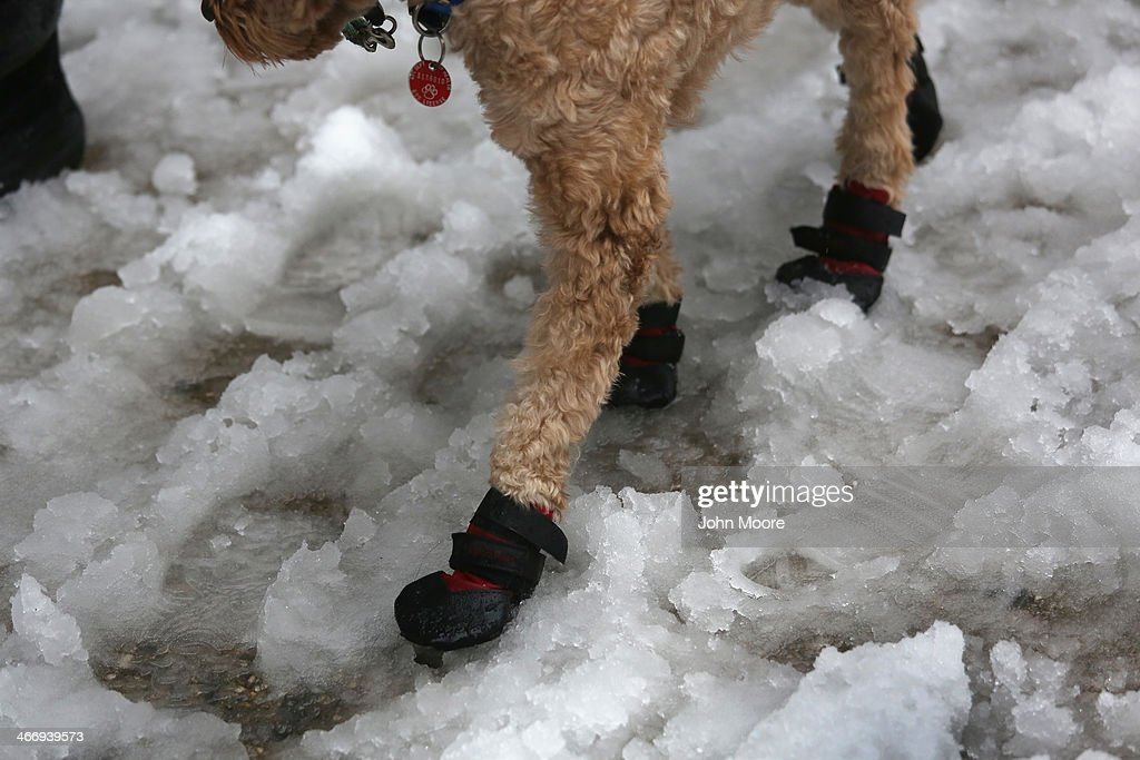 A dog navigates a slushy intersection near Union Square on February 5, 2014 in New York City, United States. New Yorkers, like millions of Americans in the northeast, dealt with the latest winter storm, which dumped 4 inches of snow on Central Park before turning to rain.