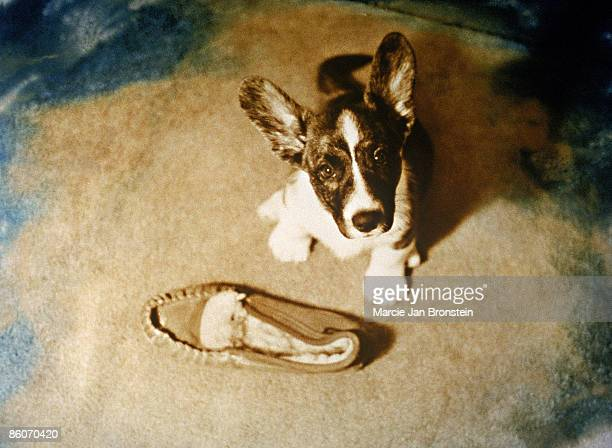 Dog next to a slipper