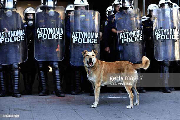 A dog nicknamed Loukanikos or sausage stands in front of Greek riot police in central Athens on December 8 2010 The dog who has been pictured in...