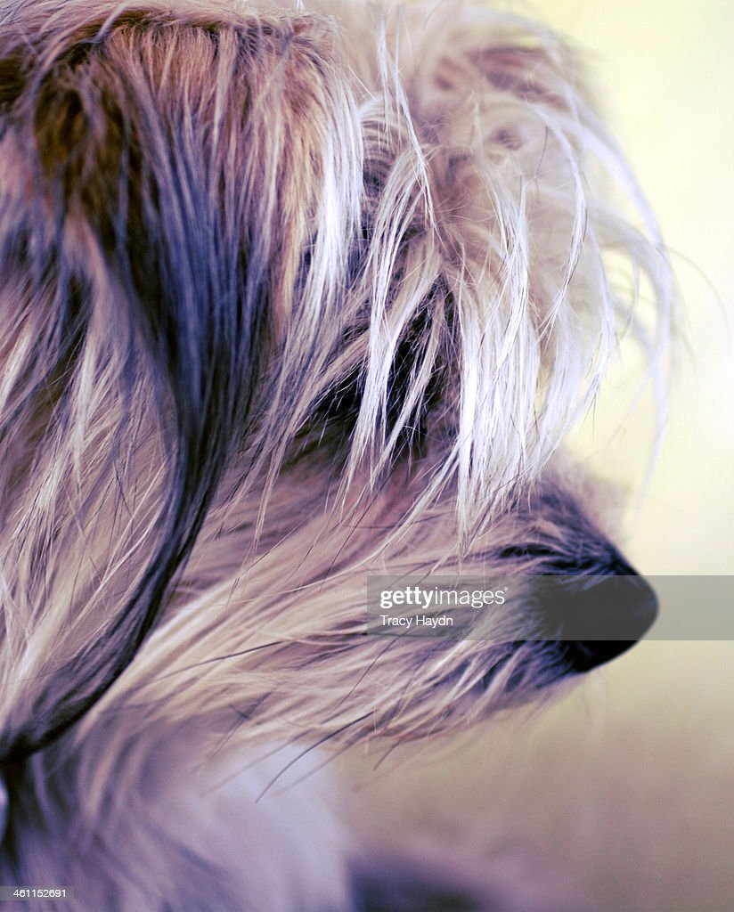 Dog nose : Stock Photo