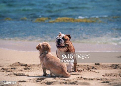 Dog of Sandy Beach