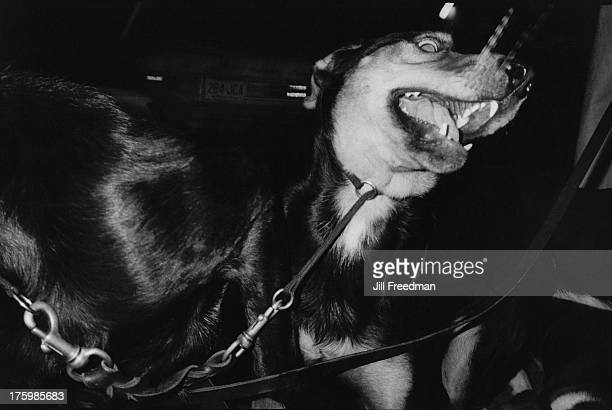 A dog on a leash on the corner of Bleecker Street and Sullivan Street in Greenwich Village New York City 1986