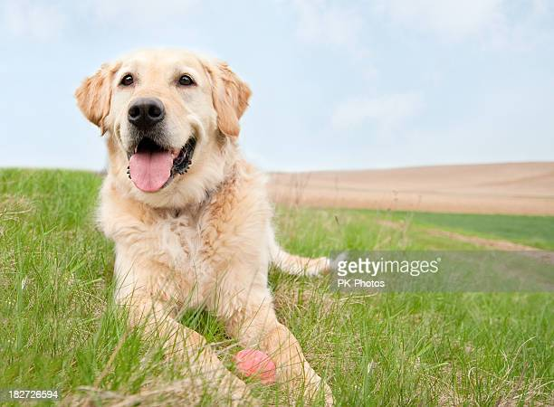 Dog on a meadow