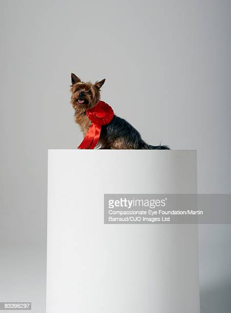 Dog on a pedestal, wearing red ribbon