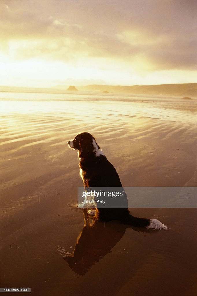 Dog on beach : Stock Photo