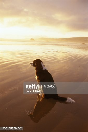 Dog on beach : Stock Photo