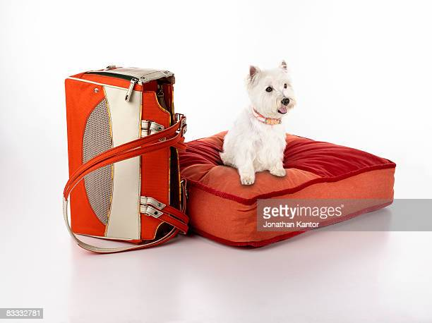 Dog on Bed with Carrier