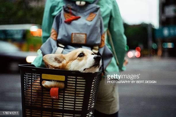 Dog on bicycle