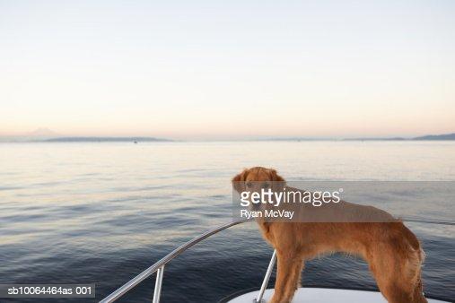Dog on boat : Stock Photo