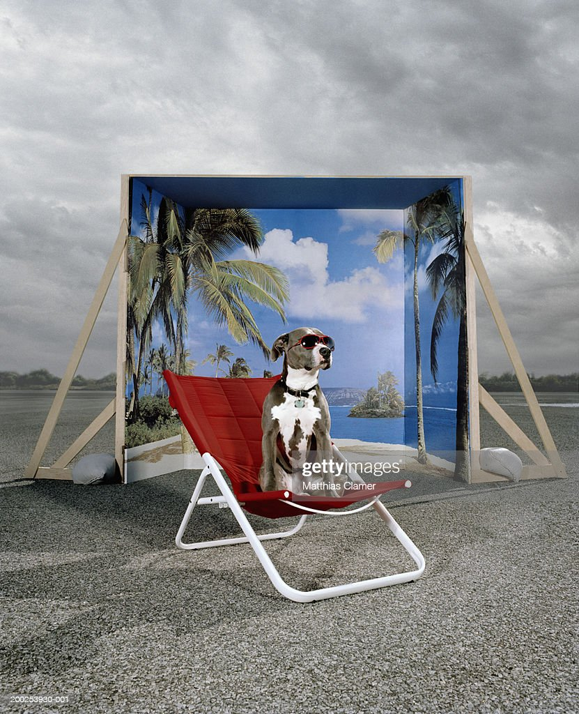 Dog on chair with glasses, backdrop in background : Stock Photo