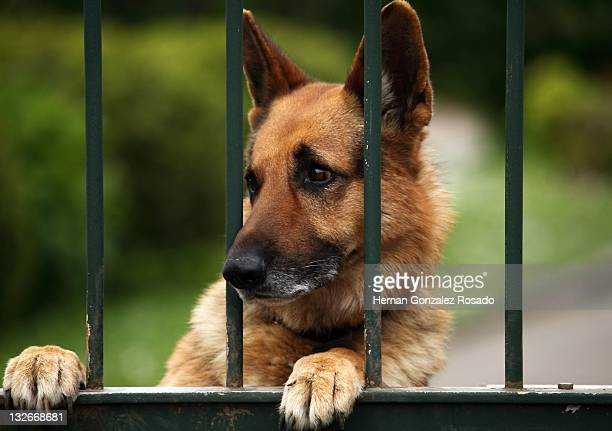 Dog on gate