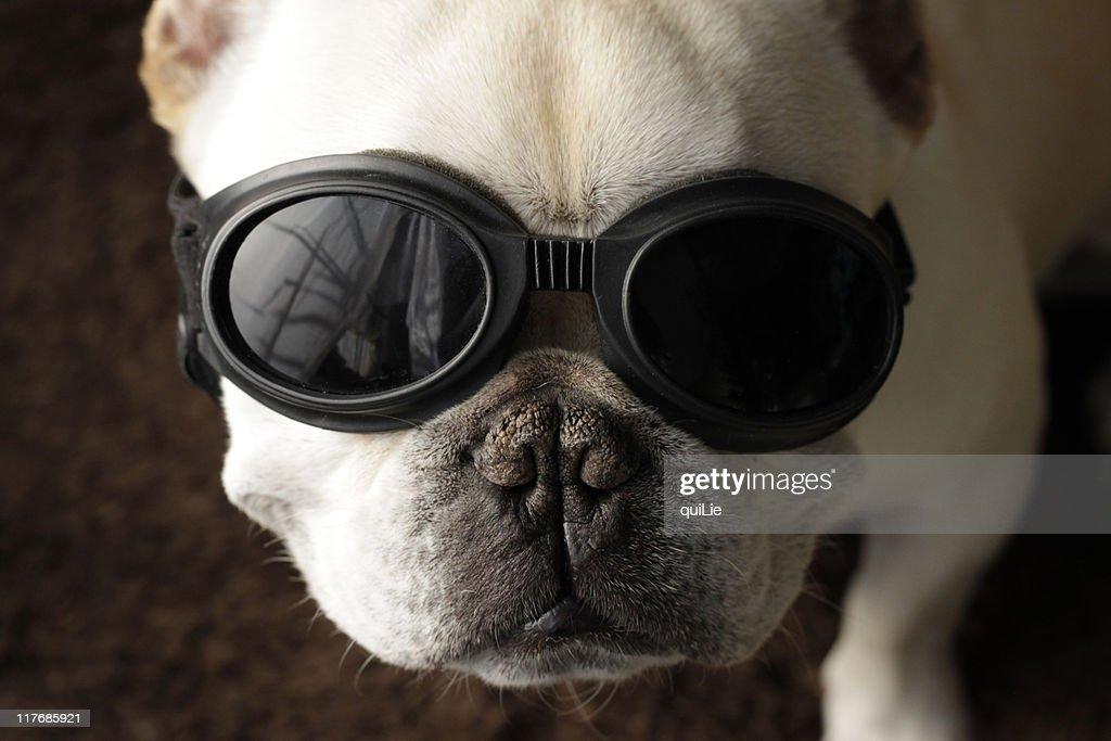 Dog on goggles : Stock Photo