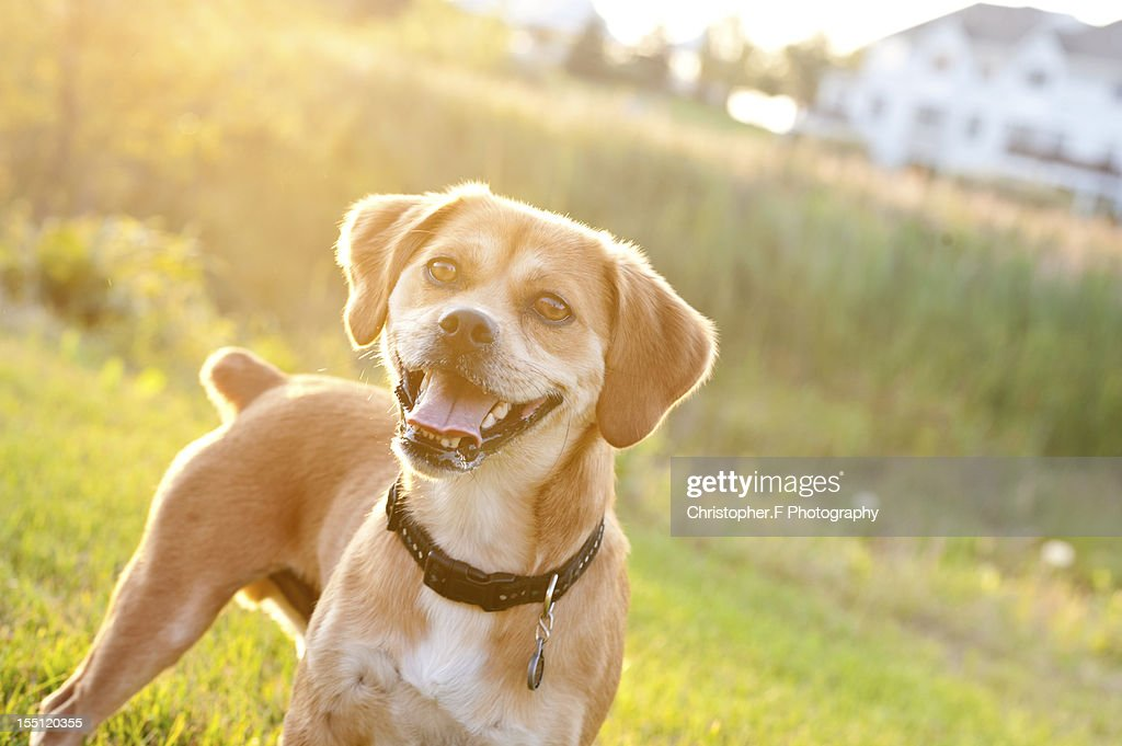 Dog on grass : Stock Photo