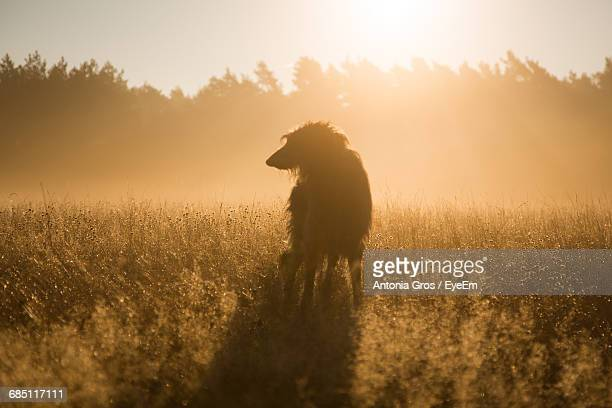 Dog On Grassy Field During Sunset