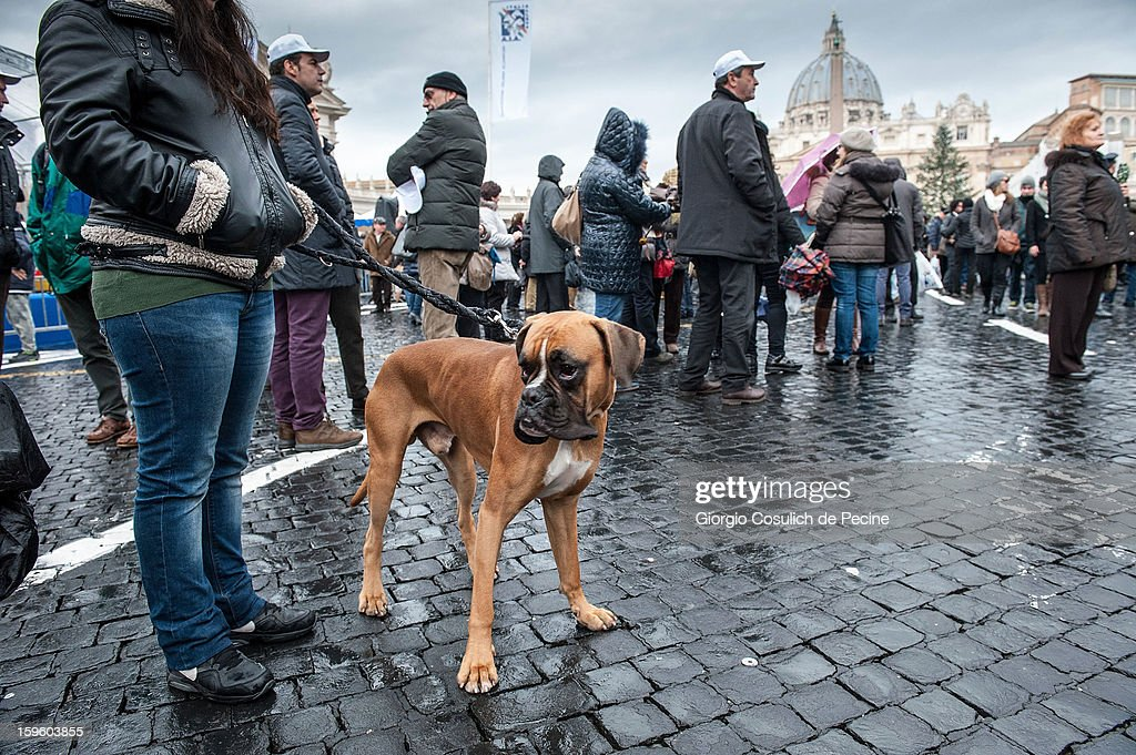 A dog on its lead as people gather in front of the Saint Peter Basilica with their pets, during a traditional day of blessing of the animals, on January 17, 2013 in Vatican City, Vatican. Every year, during the feast of St. Anthony the Abbot, the traditional blessing of the animals is celebrated.