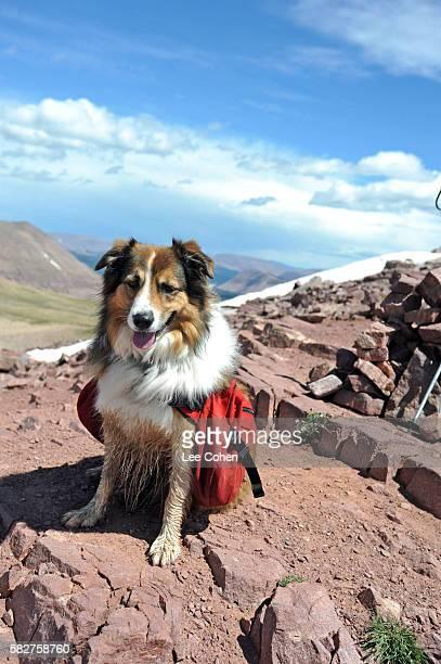 Dog on Kings Peak, Utah's highest mountain