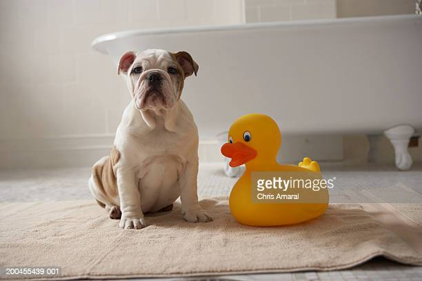 Dog on mat with plastic duck