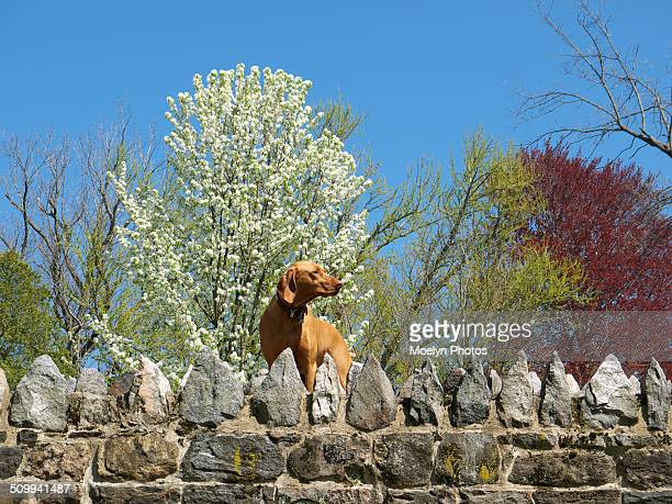 Dog on Old Croton Aqueduct Trail