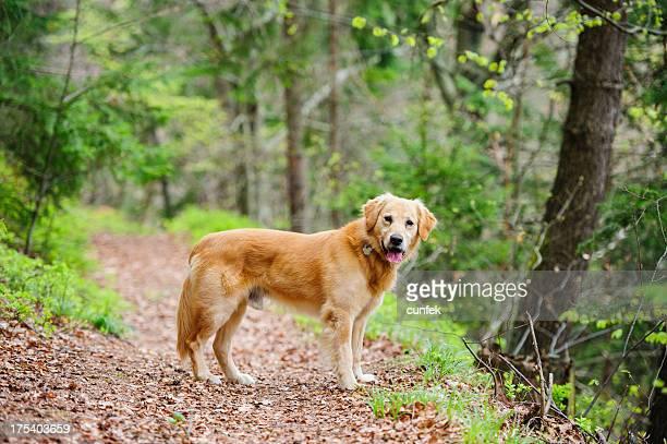 Cão na localização