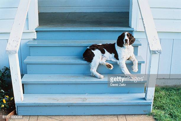 Dog on Porch Steps