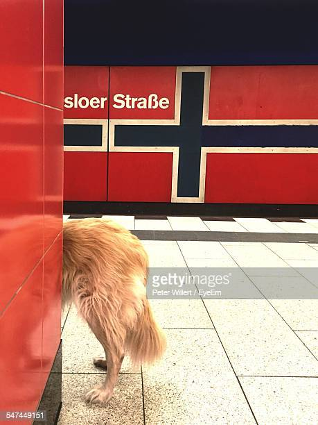 Dog On Railroad Station