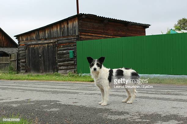 Dog On Road Against Built Structures