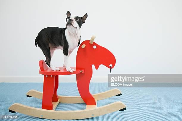 Dog on rocking horse