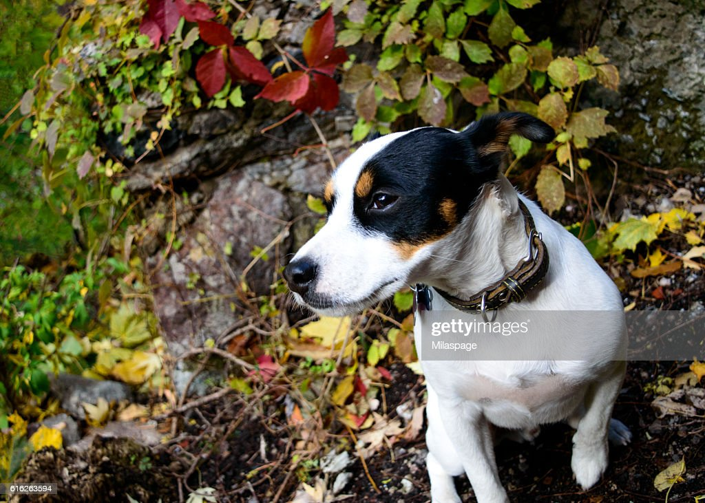 Dog on Rocky Hill Autumn Background Nature Portrait : Stock Photo