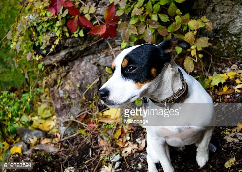 Dog on Rocky Hill Autumn Background Nature Portrait : Stock Photo
