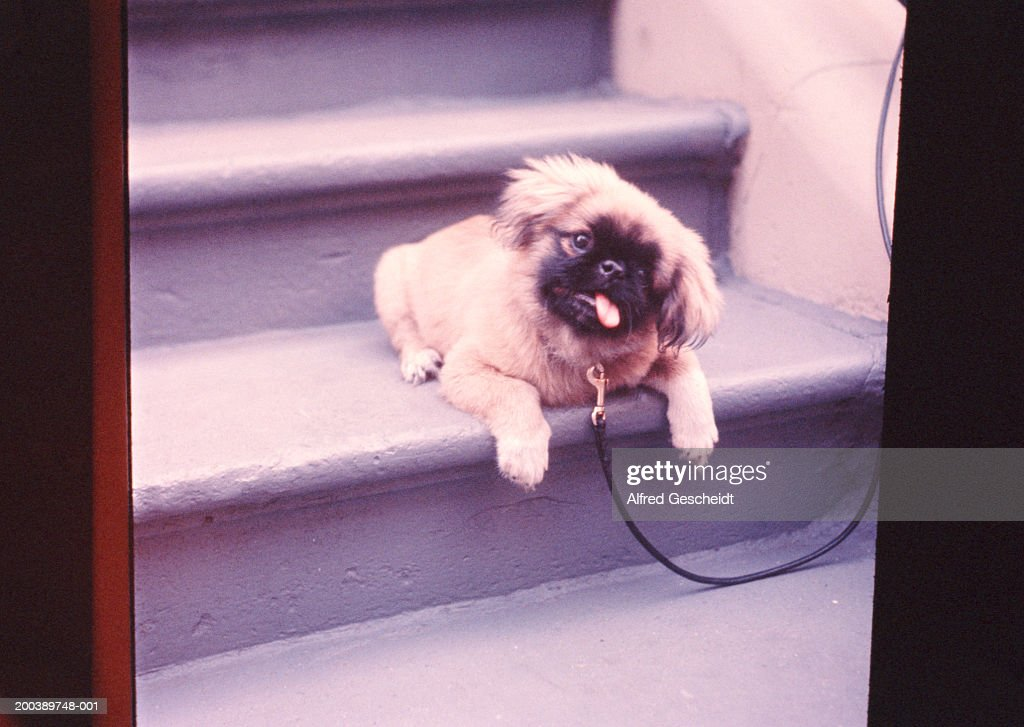 Dog on step outdoors (majenta tone) : Stock Photo