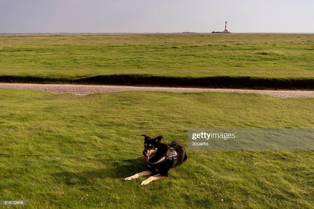 Dog on the Beach : Stockfoto