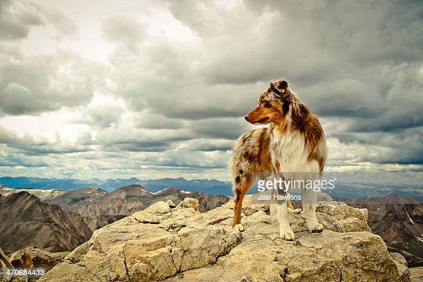 Dog on top of mountain with clouds