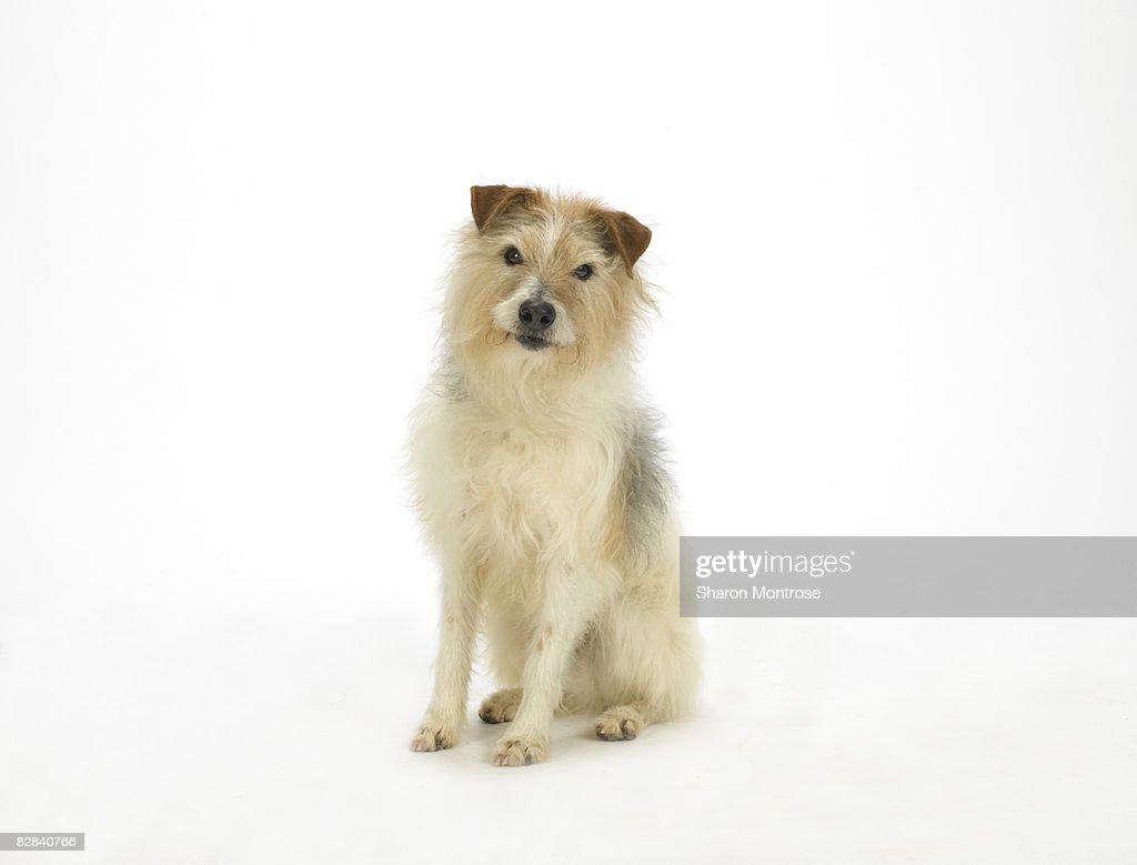 Dog on White 10 : Stock Photo