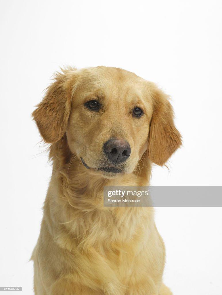 Dog on White 122 : Stock Photo