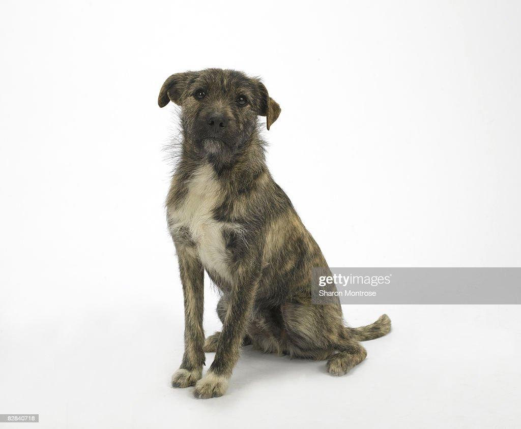Dog on White 16 : Stock Photo