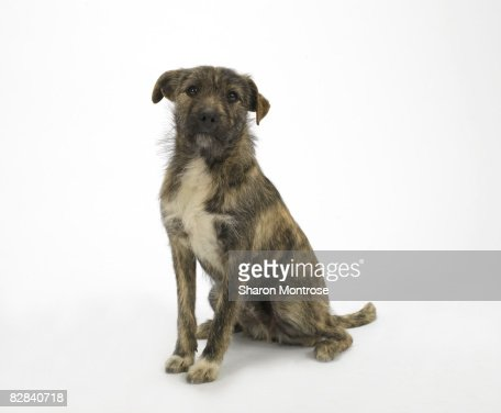Dog on White 16 : Stock Photo