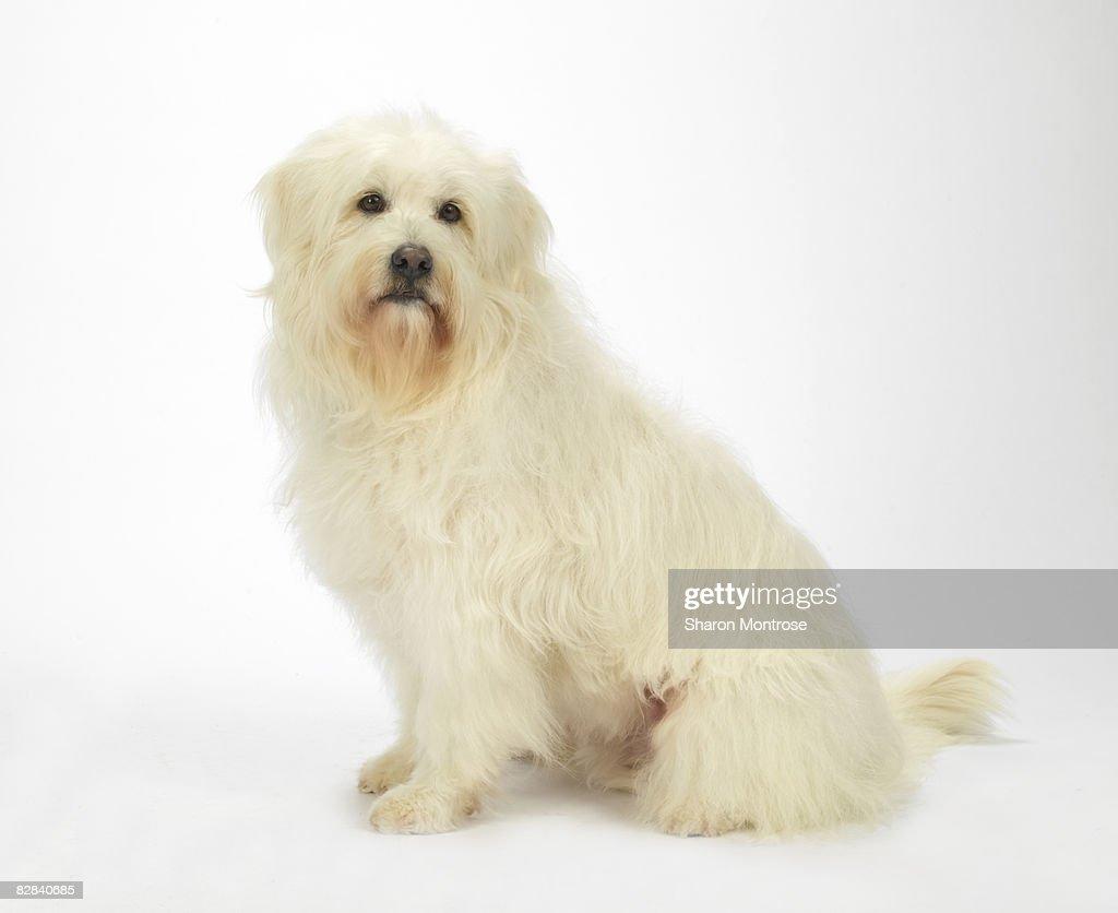 Dog on White 18 : Stock Photo