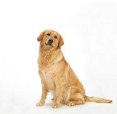 Dog on White 6