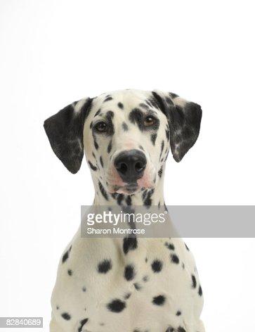 Dog on White 93 : Stock Photo