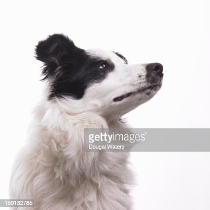 Dog on white background.