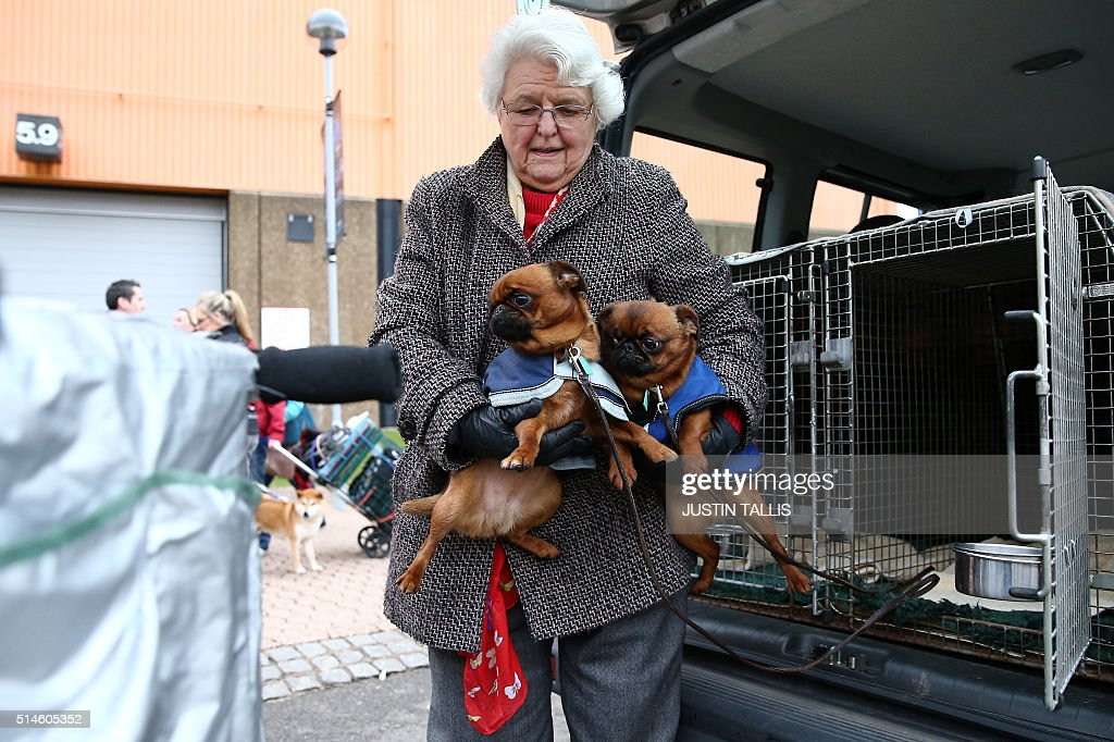 A dog owner arrives with her Griffon Bruxellois dogs on the first day of the Crufts dog show at the National Exhibition Centre in Birmingham central...