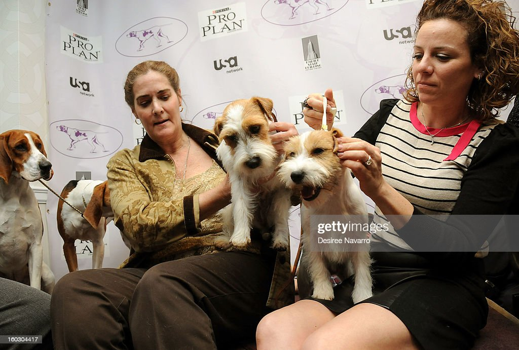 Dog owner (L) Candace Lundin and her Russell Terrier dog 'Turbo' and (R) Roxanne Sutton with Russell Terrier dog 'Legs' attend The Westminster Kennel Club 137th Annual Dog Show - Press Conference at Affinia on January 28, 2013 in New York City.