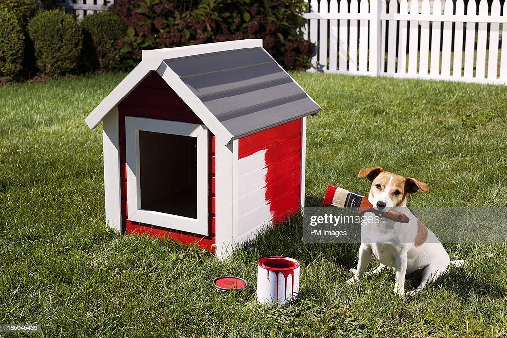 Dog painting dog house : Stock Photo