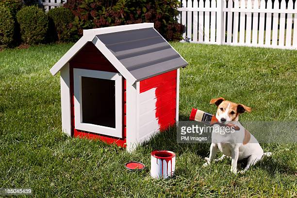 Dog painting dog house