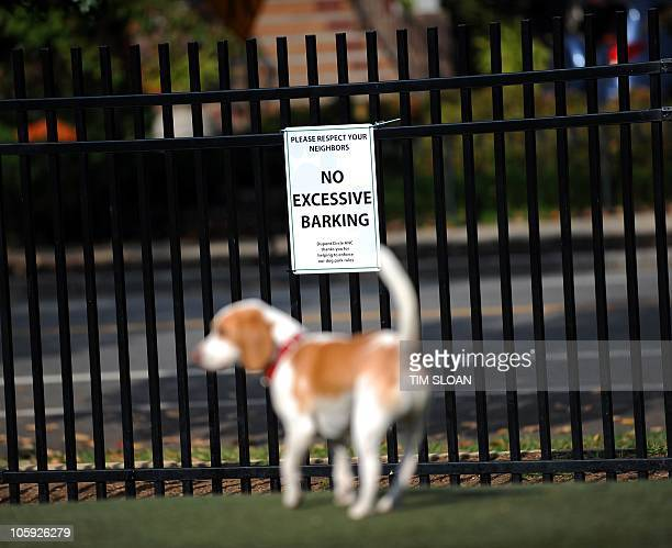 Dog parks can get loud during peak hours when as many as 25 dogs play and socialize on October 21 2010 at the S street Dog Park in the NW section of...