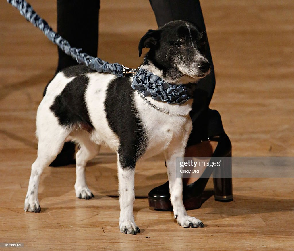 A dog participates in FIT's Fifth Annual Pet Apparel and Accessories Fashion Show at The Fashion Institute of Technology on May 3, 2013 in New York City.