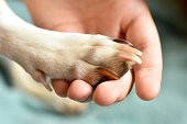 Dog Paw and Human Hand with love