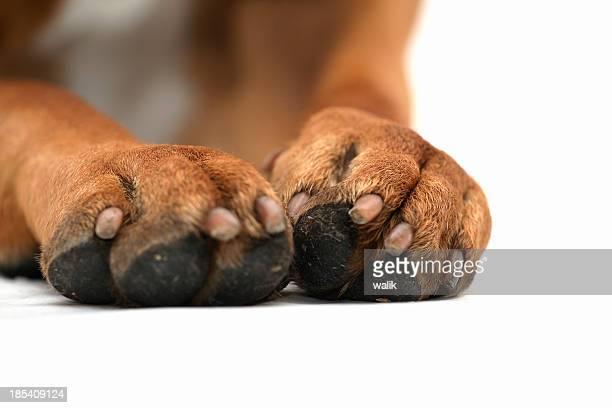 Hund Pfoten